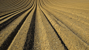 Les engrais agricoles