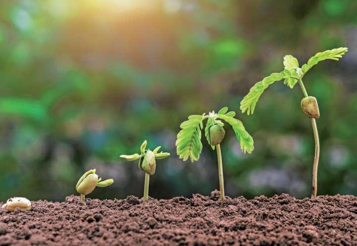 De la graine à la plante, 48h pour survivre