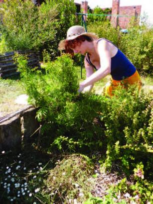 Sandrine Bazzo-Terras récolte de la consoude
