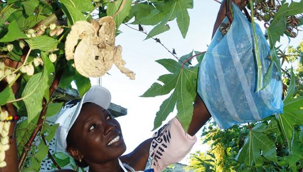 La force des rituels  haïtiens au quotidien
