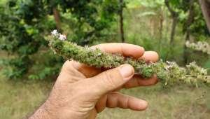 Plantes covid