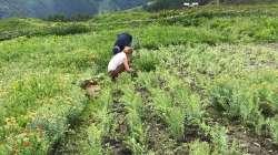 Andrée Fauchère dans un champs de rhodiole