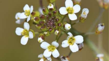 Les nouvelles armes des plantes pour s'adapter à la sécheresse