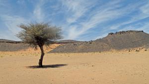 L'ouest du Sahara et le Sahel comptent de 1,8milliard d'arbres