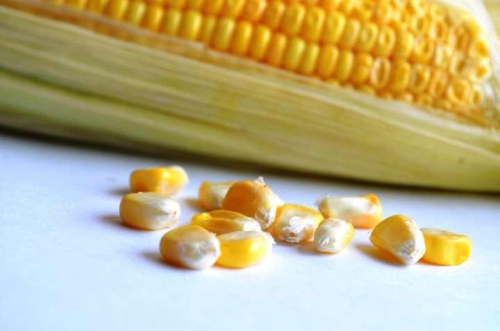 Céréale - Maïs
