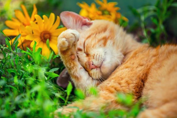 Stress : les huiles essentielles de la relaxation