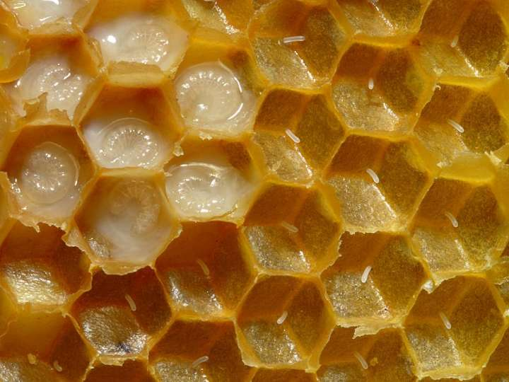 Le miel est un aliment naturel riche en sucres