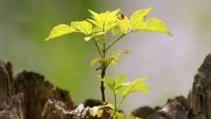 Phytothérapie : Autoguérison, sa force est en vous