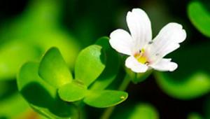 L'élixir de fleur, un véritable remède ancestral