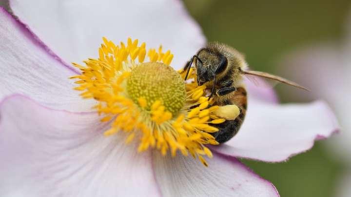 Le miel monofloral peut être utilisé tous les jours pour renforcer l'organisme ou de manière ponctuelle pour soigner les affections respiratoires fréquentes de l'hiver.