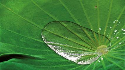Biomimétisme, quand la nature inspire l'homme