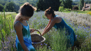 Nathalie (à droite) et Stéphanie ceuillent des bleuets. Crédit photo : © Serge Lapouge