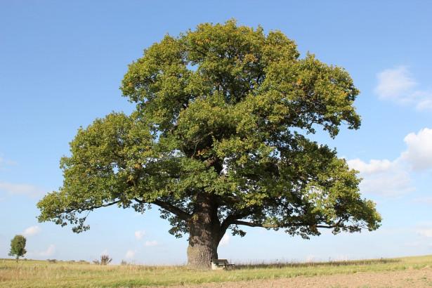 L'Oak vous aidera à lâcher prise, être plus modéré et à demander des conseils ou de l'aide.