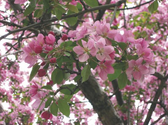 Les fleurs de Bach ont-elles perdu leur âme?