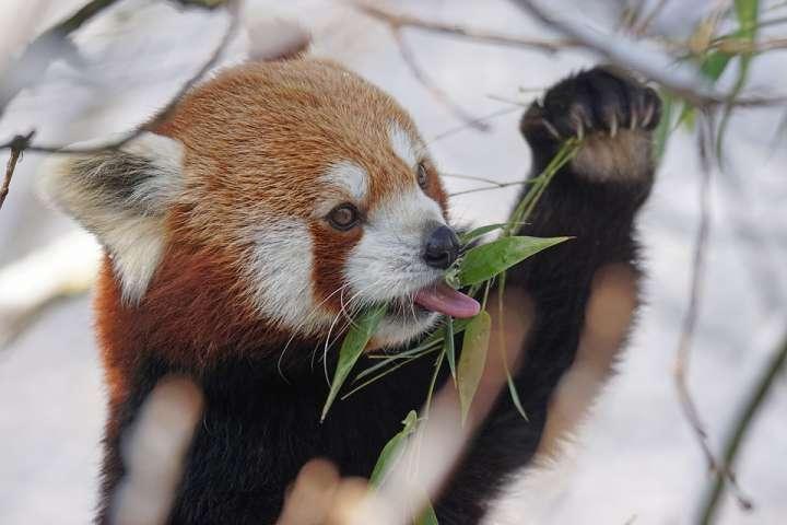 Les animaux aussi ont recours aux  plantes pour leur santé.