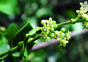 Plantes : maîtriser son poids