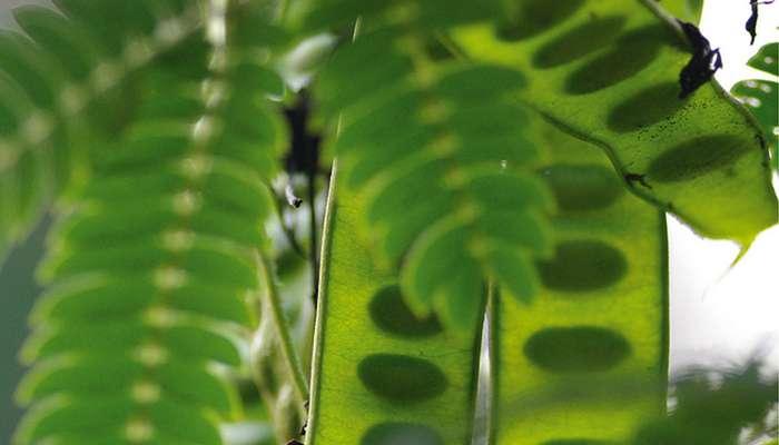 Aromathérapie : prévenir et traiter les calculs