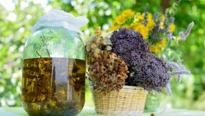 Solstice d'été : l'alchimie plante-soleil !
