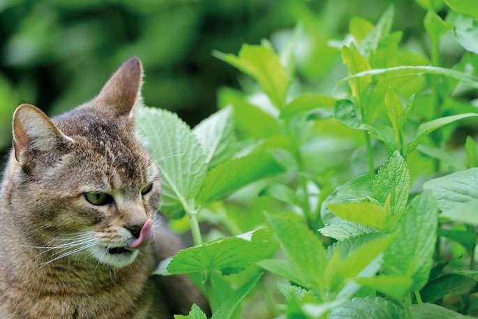 La phytothérapie : pour les animaux de compagnie aussi !