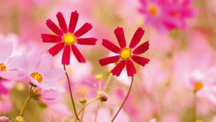 Les élixirs floraux pour rester amoureux