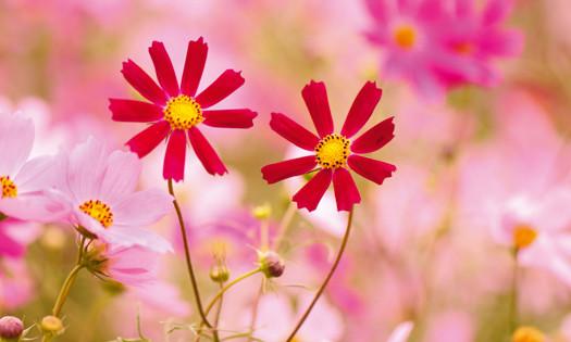 Si les élixirs floraux ne sont pas des philtres d'amour, ils peuvent nous mettre dans de bonnes dispositions pour souffler sur les braises.