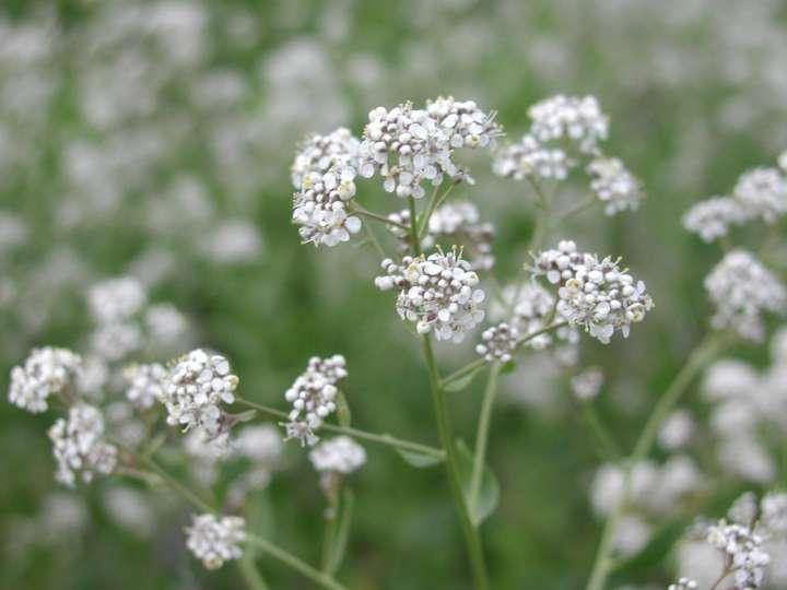 Plante de Maylis - Renaissance d'une plante détox