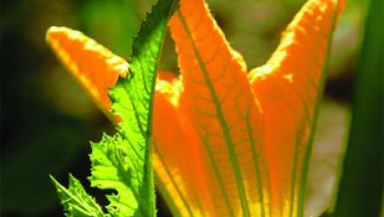 aromathérapie : les fleurs fraiches