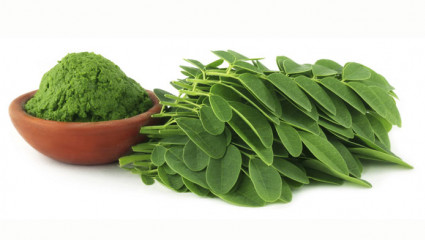 moringa poudre et feuilles