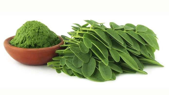 Le Moringa (Moringa oleifera) - Propriétés, bienfaits et contre-indications  - Plantes et Santé