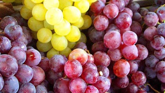 Pour que cure de raisins ne rime pas avec cure de pesticides.