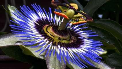 Les plantes de France, plus contrôlées, possèdent une très bonne image.