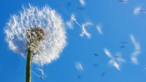 Phytothérapie : allergie traitée par les plantes