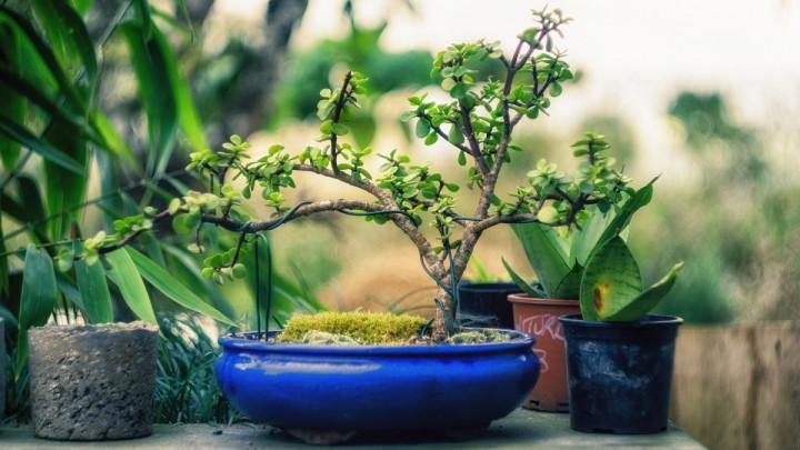 L'atmopshère de votre maison, comme celle de tous les lieux clos, est poluée. Mais certaines plantes assainisent l'air.