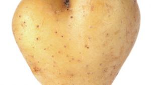 La pomme de terre : quels bienfaits et modes de cuisson?