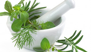 Anti-fatigue : 5 plantes qui boostent