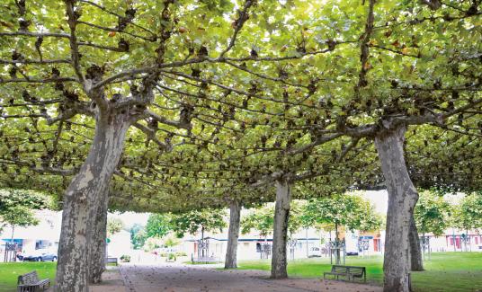 Georges Feterman : un homme remarquable au service des arbres