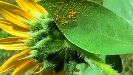 Phytothérapie : Les allergies dans la peau