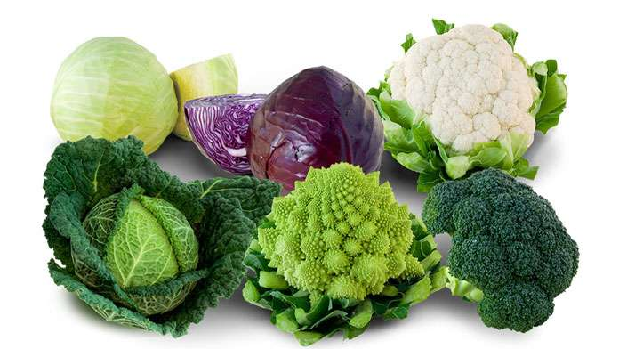 The nutritional qualities of cabbage - plants and health
