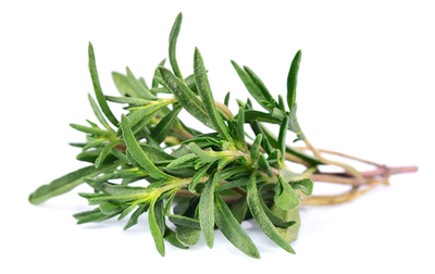 June thyme: invigorate your daily life - plants and health