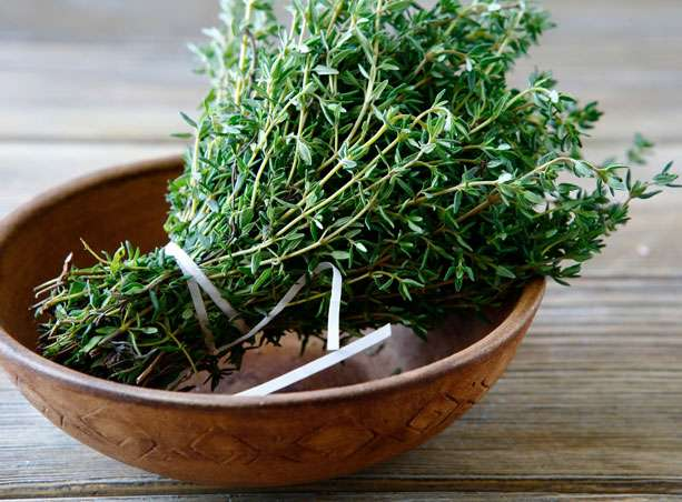 Thyme properties and benefits of a powerful antiseptic ...