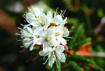 Aromathérapie : Se revitaliser en douceur