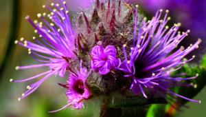 Phytothérapie : aromathérapie quantique