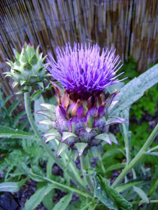 Aromathérapie : libérez les bronches