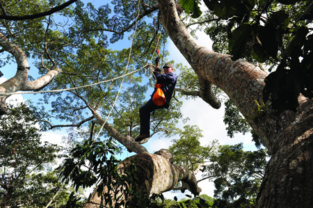 Le baron perché des forêts tropicales