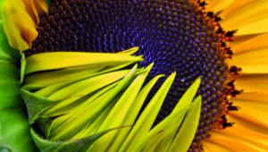 Phytothérapie : les huiles végétales