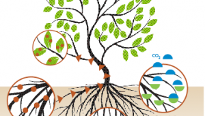 Quand les plantes guérissent les sols pollués