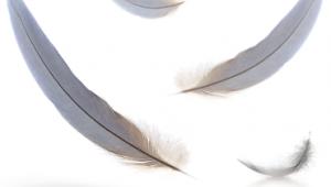 Aromathérapie : perte de cheveux