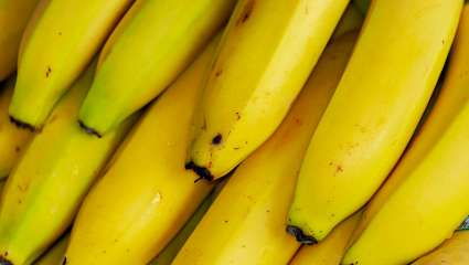 Une banane bio made in France