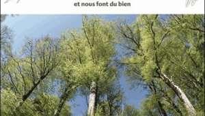 Au Bonheur des Arbres, Collectif, éd. Terre Vivante