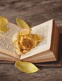 Livres : Grand guide des plantes potagères, la pâtisserie pour diabétiques, c'est permis ! et L'agriculture énergétique ...